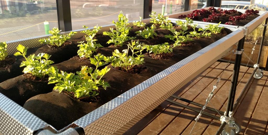 rolling edible garden