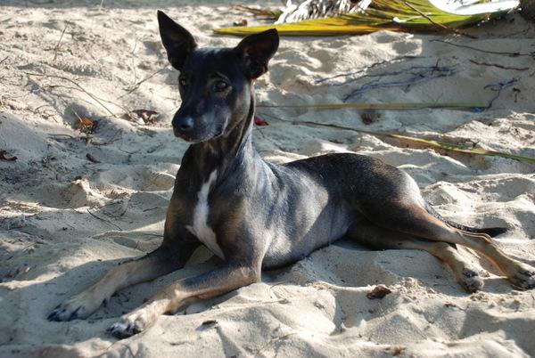 Il nostro amico in Playa Grande, Rio San Juan