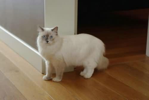 給貓洗澡能除去跳蚤嗎 - 寵物寶典 - 天晴資訊網