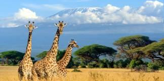 Goedkope vliegtickets Nairobi Kenia