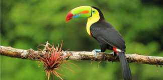 Open-jaw Centraal-Amerika