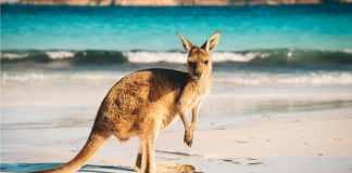 Vliegtickets Australië Nieuw Zeeland