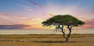 Goedkope vleigtickets Namibië