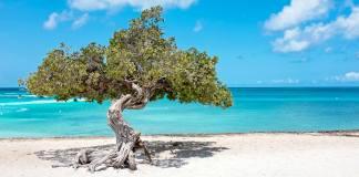 Last Minute Curaçao Aruba