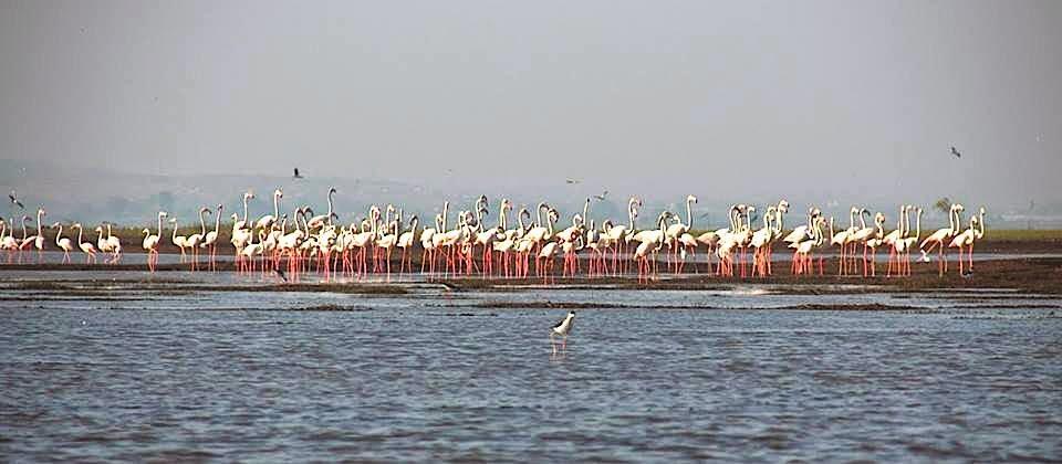 Bhigwan: Flamingos