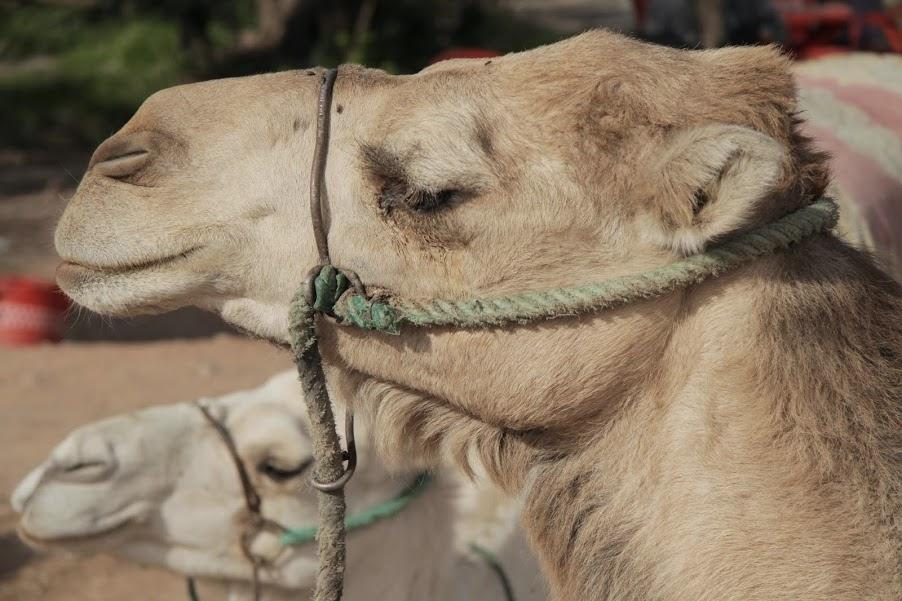 Marrakech: Morocco calling!