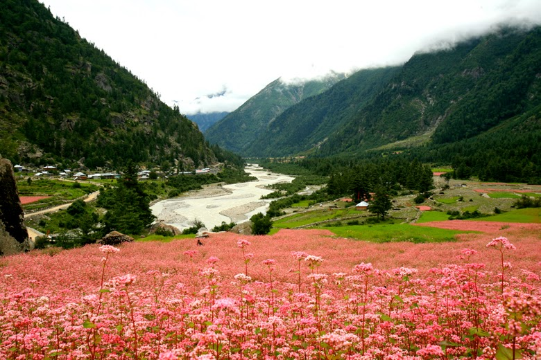 Bounty of Nature: Sangla Valley (pic courtesy: Banjara Camps)