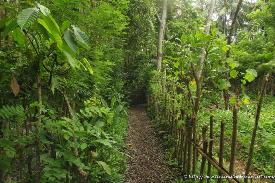 Ubud Spice Plantation-1