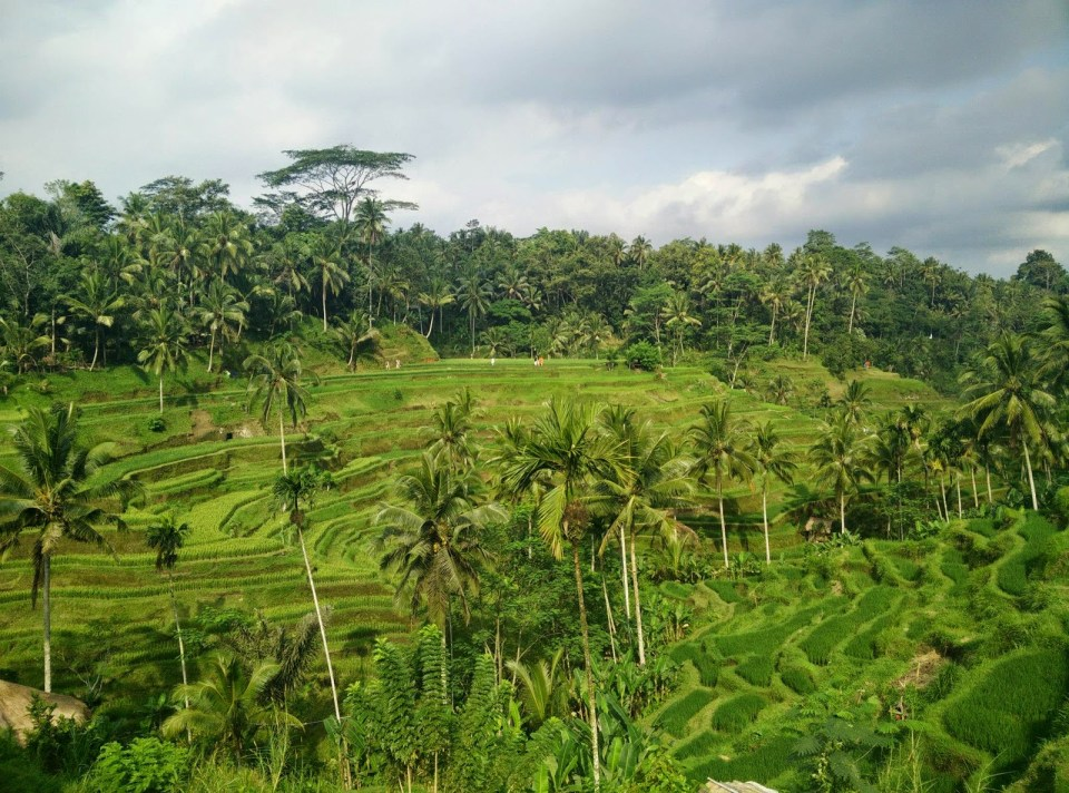 Ubud Tegalalang Rice Fields