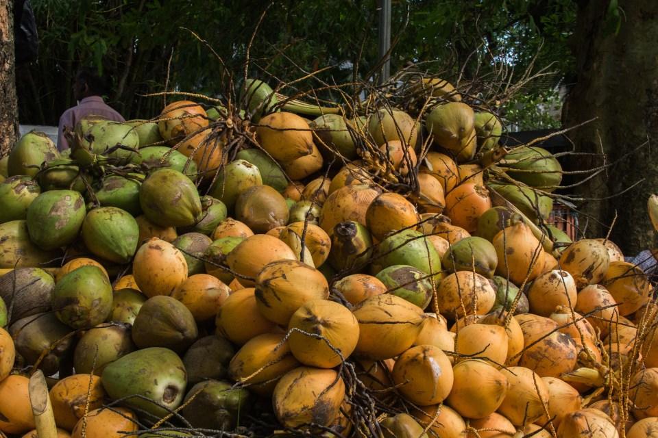 CoconutFort Kochi