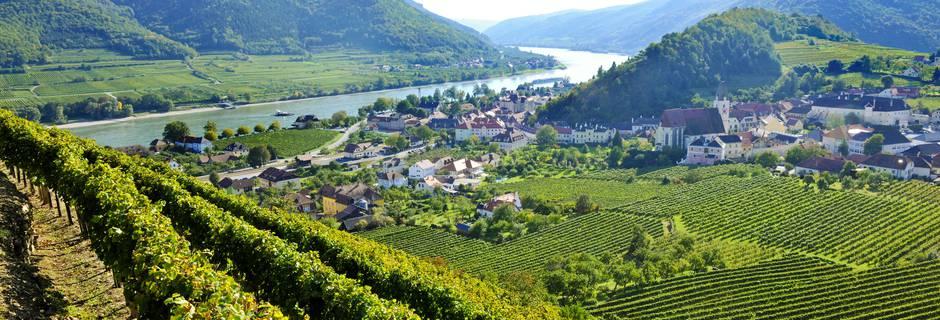 Vineyards in Krems (pic courstey: Krems Tourism)