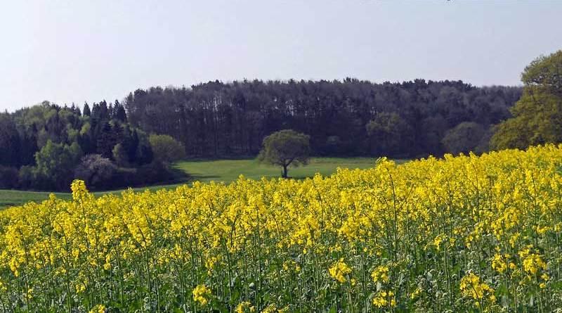 Ticknall area Walks
