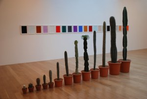 Stan and Vicky's cacti in an installation by Turner prize winner, Martin Creed.