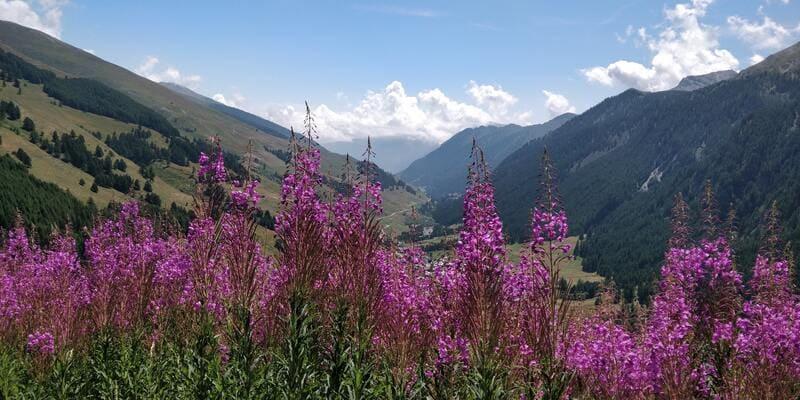 panorama de montagne queryas
