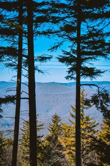 ecotourisme - forêt pin - responsable