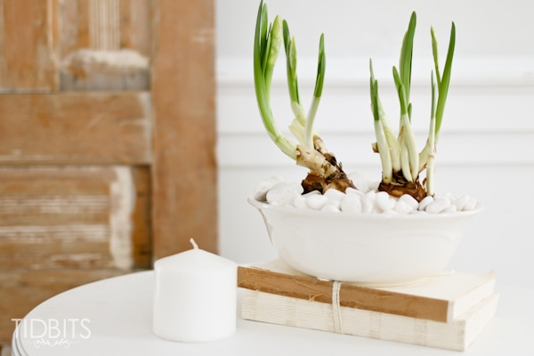 2 Ways to force bulbs indoors. Enjoy fresh greenery and clippings in your home all year long.