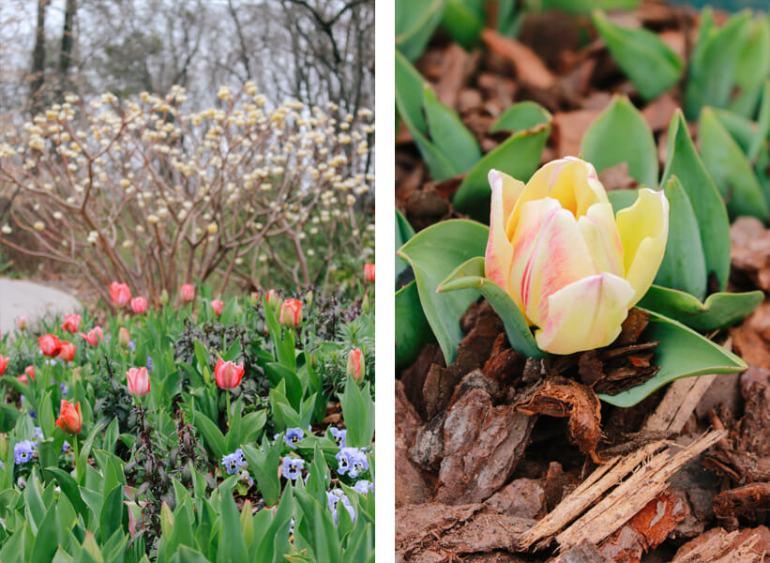 atlanta-botanical-garden-2a