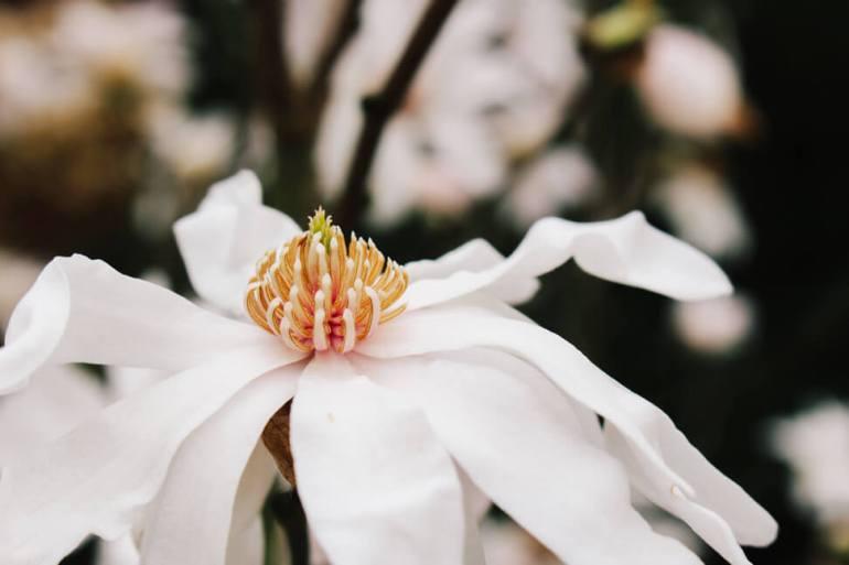 atlanta-botanical-garden-7a