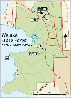 Welaka State Forest  Florida State Forests