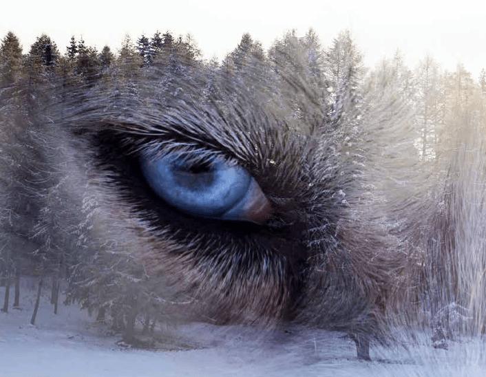 Människan, djuren och resten av naturen – Till kritiken av vår medvarelseglömska ur ett etiskt perspektiv