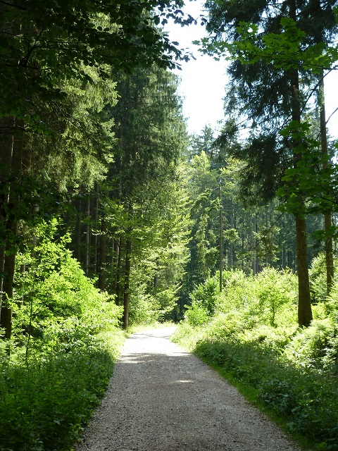 Carl-Hirnbeinweg-2