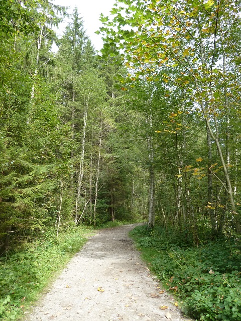 Durachtobel-Waldweg