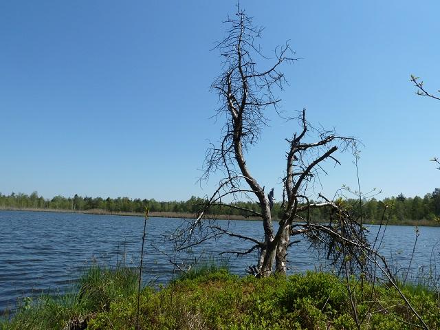 Blick auf den Riedsee im Wurzacher Ried