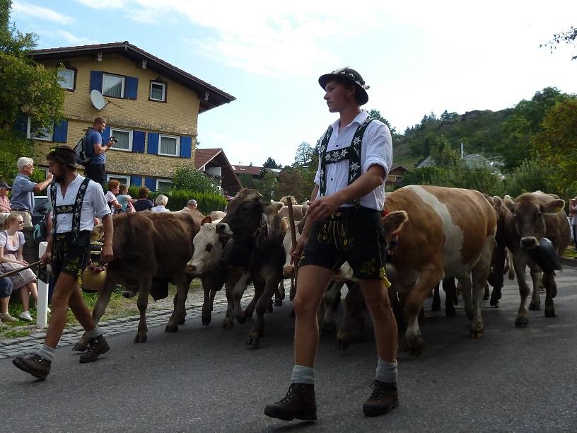 Viehscheid Kranzegg 2016 - Jungviehherde von der Alpe Breitensteiner Berg