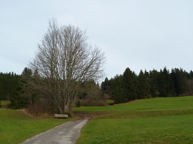 Wanderweg bei Zell im Allgäu