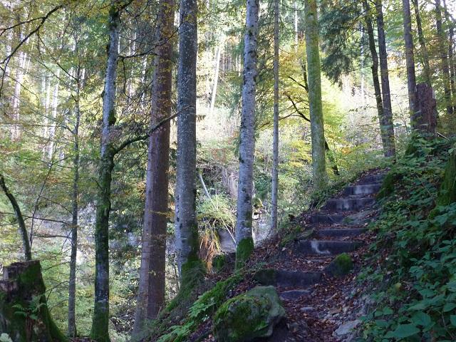 Bergwald am lustigen Wanderweg bei Kranzegg am Grünten