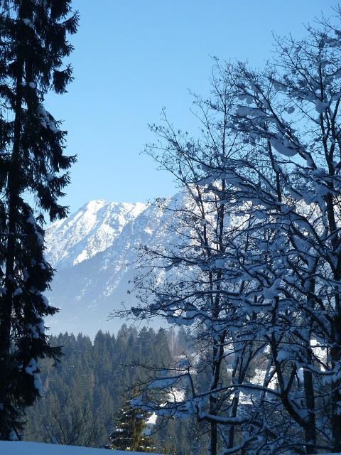 Bergblick durch verschneite Bäume