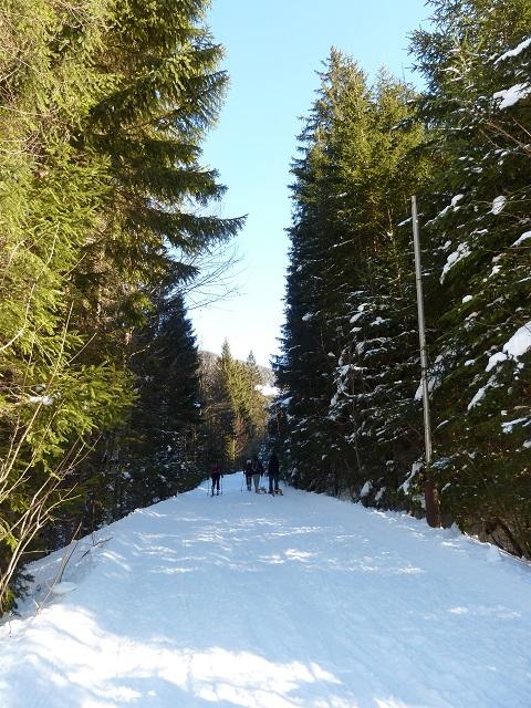 der Ostlerforstweg am Breitenberg im Winter