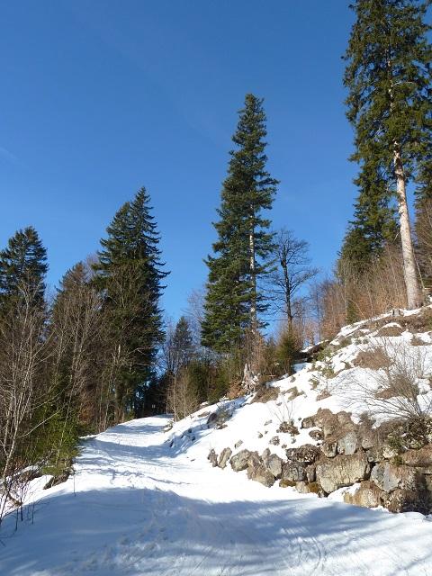 Aufstieg zum Rodeln am Breitenberg
