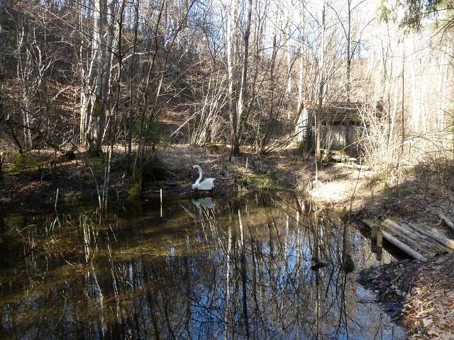 Waldteich mit Holzschwan
