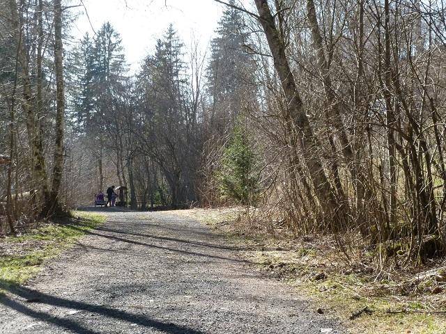 Waldweg bei Görisried