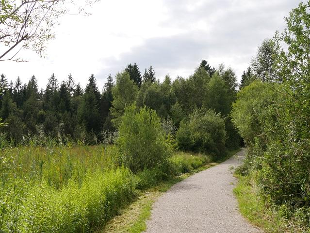 Rundwanderweg Hopfensee durchs Moor