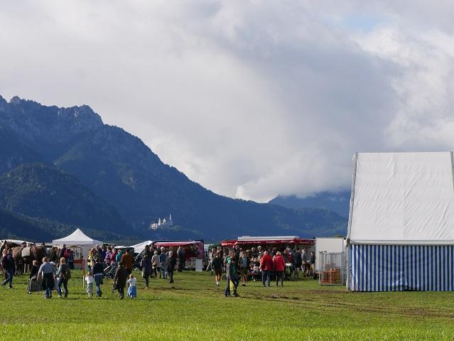 Viehscheidplatz Buching mit Festzelt und Blick auf Neuschwanstein