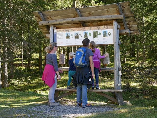 Lernstation Bäume am Erlebnisweg Uff d'r Alp am Nebelhorn bei Oberstdorf