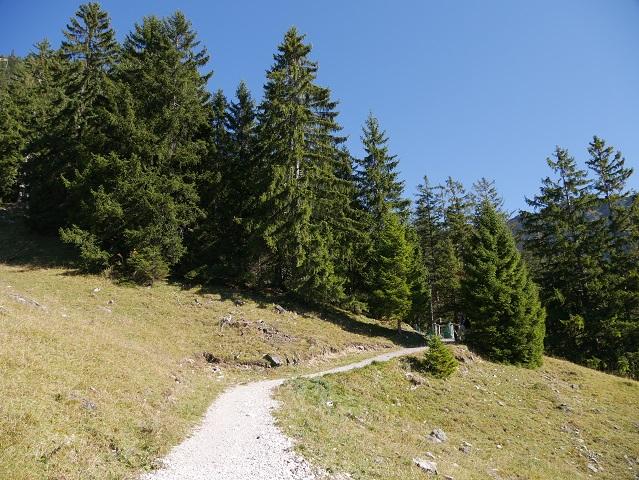 Rundwanderweg Seealpe - Waldstück mit Hängerbrücke