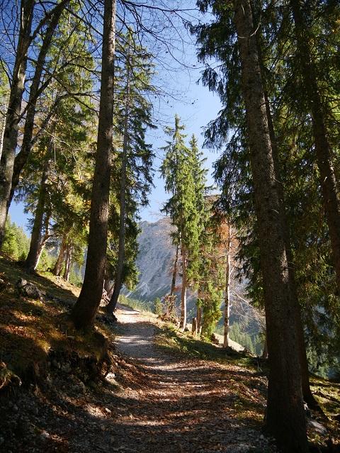 Rundwanderweg Seealpe am Nebelhorn - durch die Bäume zum Licht