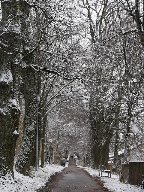Beginn der Kurfürstenallee MOD im Winter