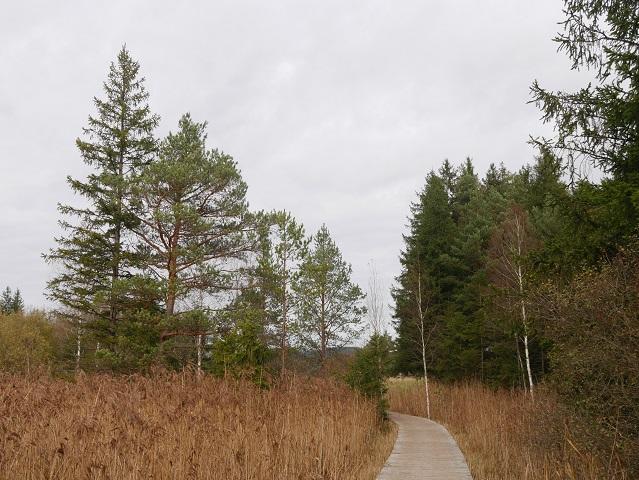 Ende des Holzwegs durchs Elbsee-Moor