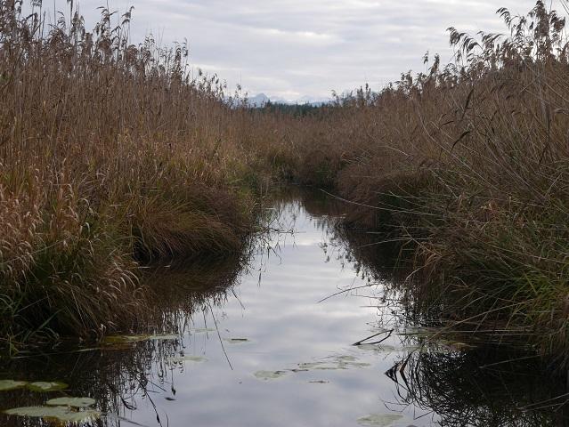 Kanal im Elbsee-Moor mit Schilf und Bergblick