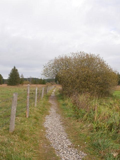 Weg durch die Feuchtwiesen am Elbsee
