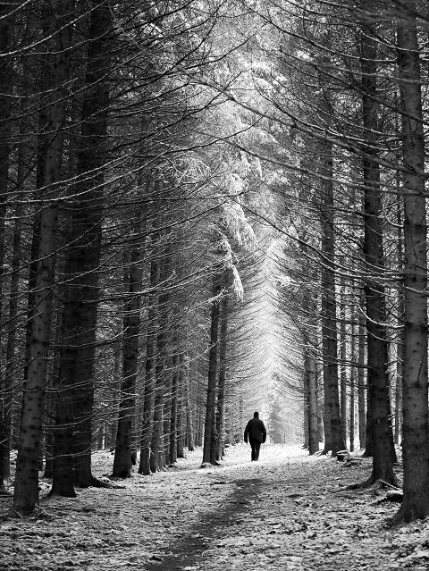 Schwarzweiß - Spaziergänger im Winterwald #FopaNet