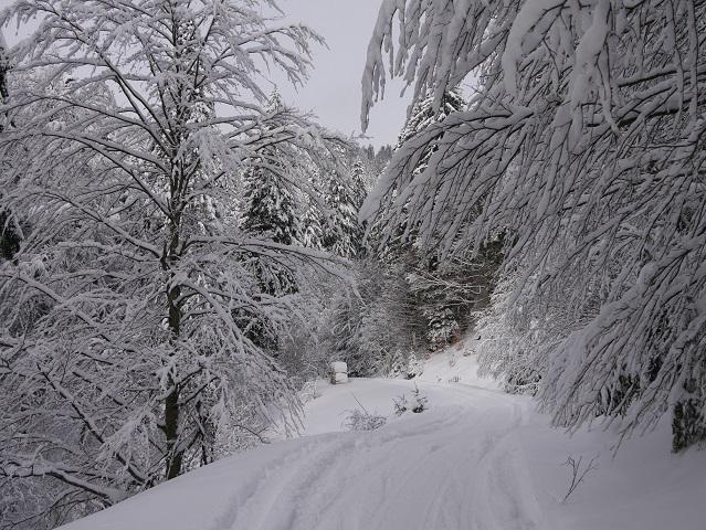 Weg durch verschneite Bäume - Winterwanderung zur Gundhütte
