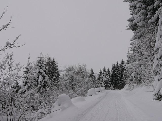 Weg zur Buchel Alpe im Winter zum Schlittenfahren