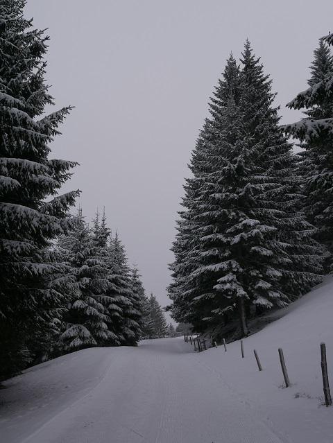 Aufstieg zur Alpe Mittelberg im Gunzesrieder Tal