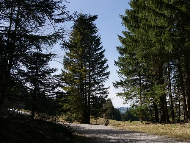 Wanderweg von Maria Trost zur Mittelstation an der Alpspitz