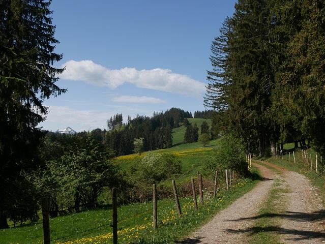 Grüntenblick vom Panorama-Rundwanderweg Oy-Mittelberg